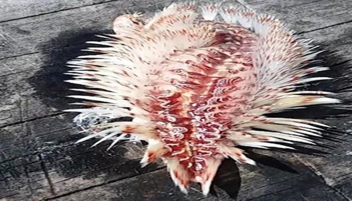 Рыбачка вытащила из воды странное извивающееся ядовитое существо