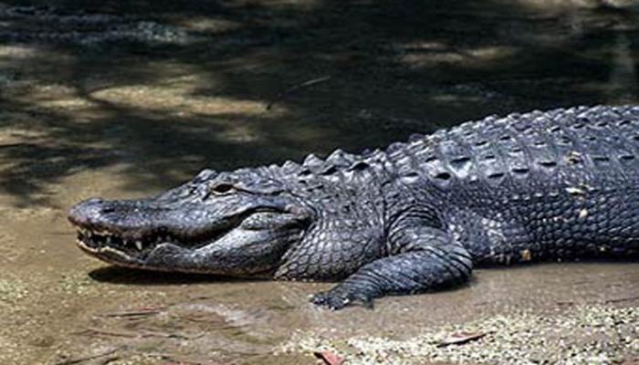 Палеонтологи нашли череп нового вида доисторического крокодила