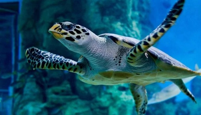 Климатические изменения превратят всех морских черепах в самок