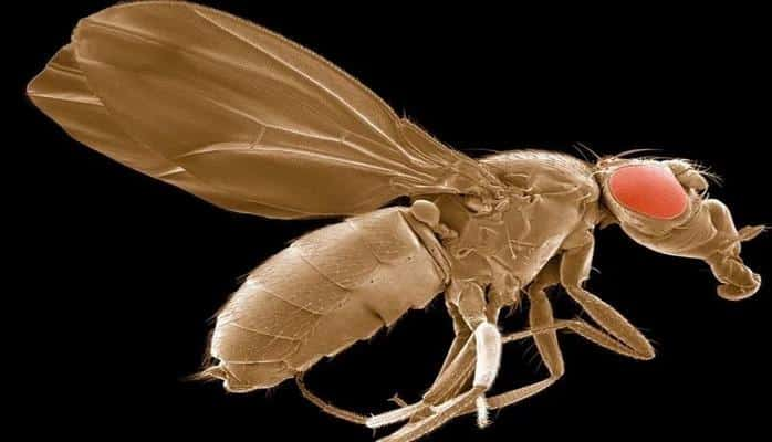 Необычные снимки обычных предметов под микроскопом