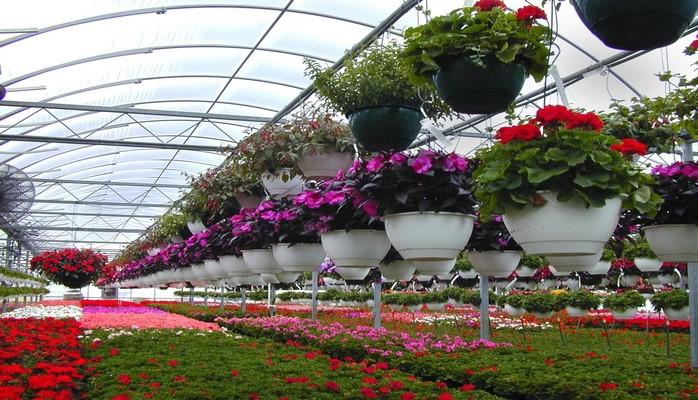Азербайджан примет участие в выставке цветоводства в Узбекистане