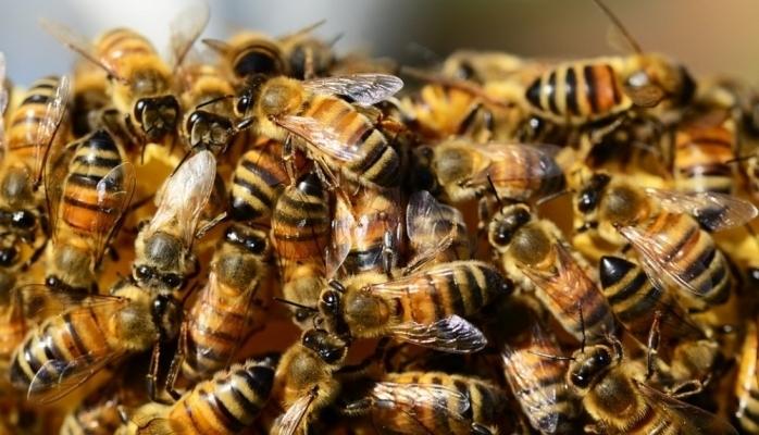 """Alimlər arıların """"naviqasiya sistemi""""nin olduğunu müəyyənləşdiriblər"""