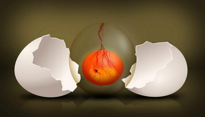 Ученые вырастили искусственную плаценту