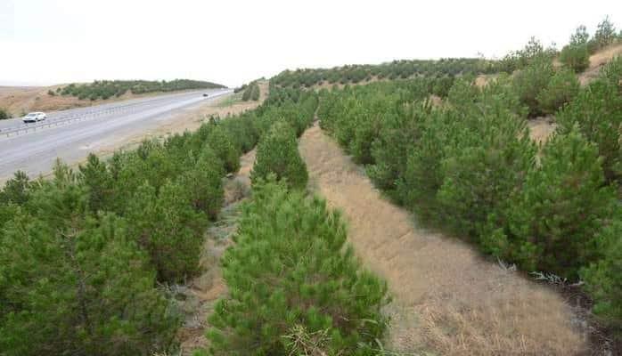 В Азербайджане посажено свыше 550 тыс. деревьев - минэкологии