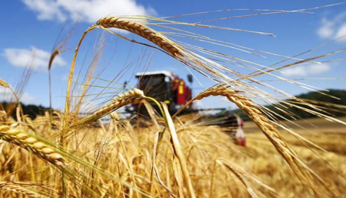 Голландские компании проявляют коммерческий интерес к агросектору Азербайджана - министерство (Эксклюзив)