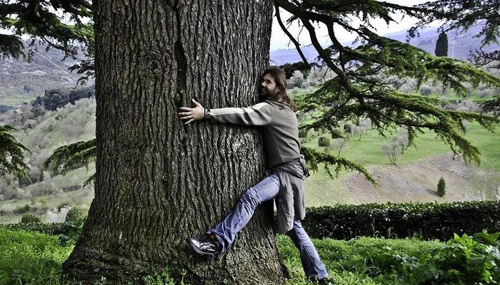 Исландцев призвали вместо людей обнимать деревья