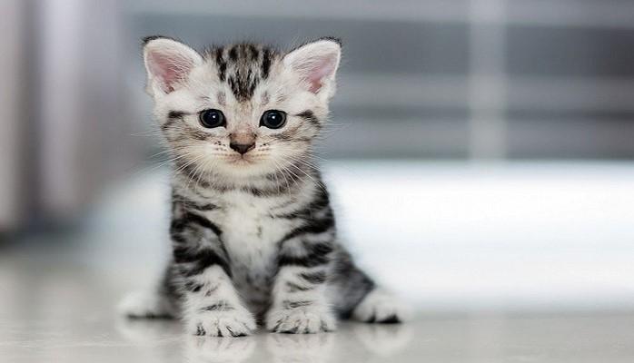 Какие болезни способны вылечить кошки