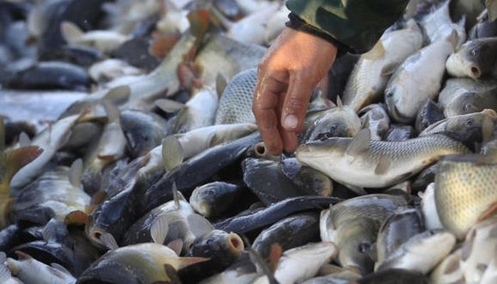 В Азербайджане задержаны браконьеры, занимающиеся незаконной ловлей рыбы