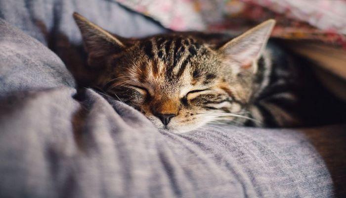 5 ошибок человека, которые сокращают жизнь кошке