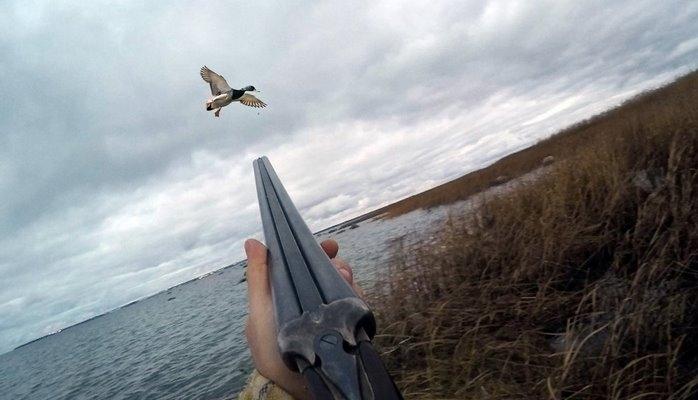 Минэкологии оштрафовало браконьеров на 4000 манатов, изъято 3 охотничьих ружья