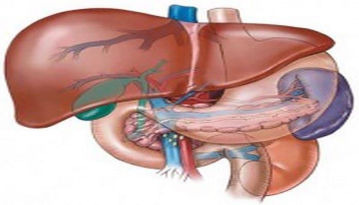 Qaraciyər