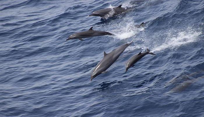 Ученые рассказали о способности дельфинов заводить дружбу через общие интересы