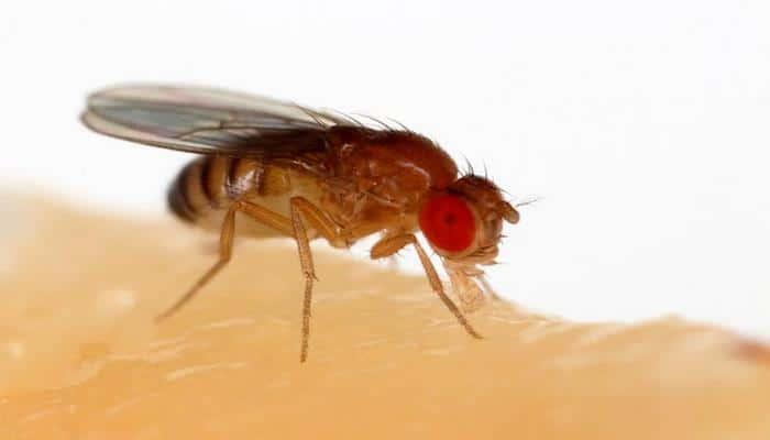 Ученые: Мутировавшие мухи начали активно размножаться в космосе