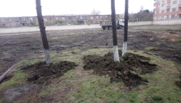 Директор парка в Сумгайыте оштрафован за пересадку деревьев без разрешения