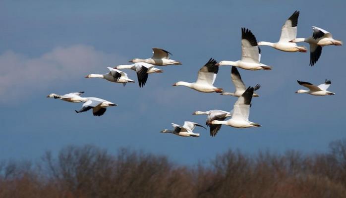 В Азербайджане будет проведен очередной мониторинг в связи с миграцией птиц