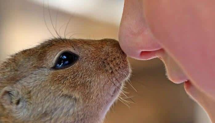 В носу обнаружили собственную защитную систему
