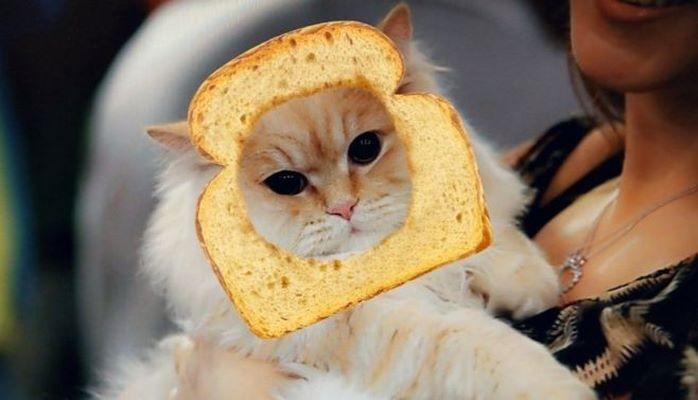 Snapchat научился накладывать маски на кошек