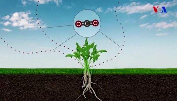 Karbon-dioksidin Floraya təsirləri