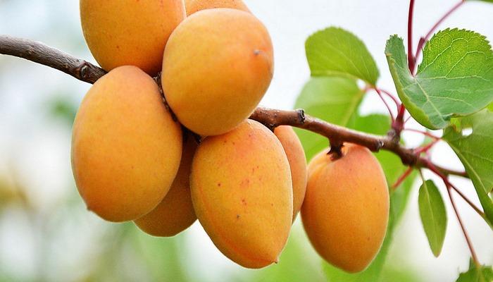 Qaraciyər üçün ən xeyirli meyvənin adı açıqlanıb