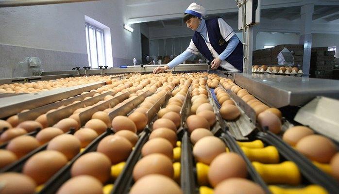 В бакинских маркетах вновь дефицит яиц? - Общество птицеводов вносит ясность