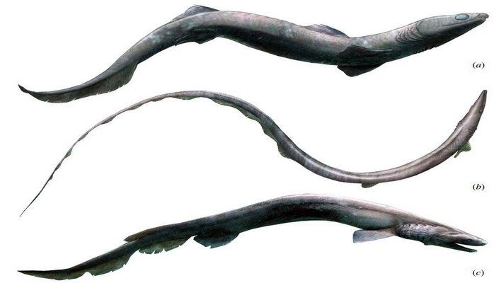 Ученые впервые обнаружили скелет древней акулы. Чем он их удивил?