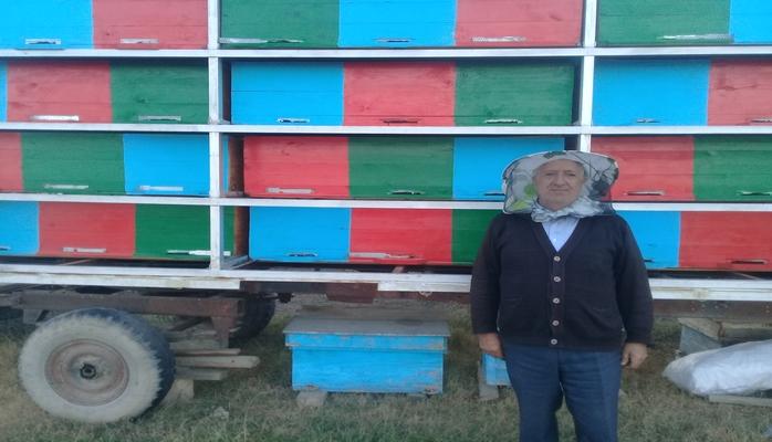 Azərbaycanda arıçılıq sahəsində yenilik