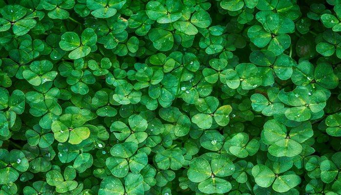 Ученые предложили переместить искусственные растения из лаборатории на воздух