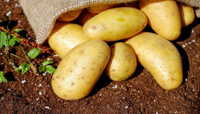 8 правил, как нужно ухаживать за картошкой, чтобы получить богатый урожай