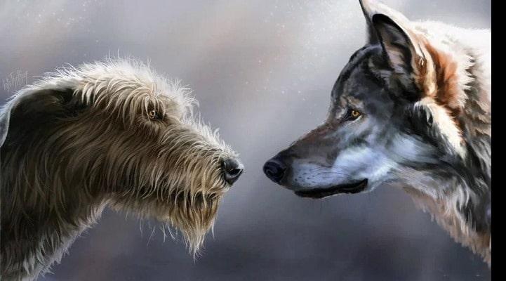 Почему человеку удалось приручить собаку, а волка - нет?