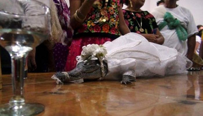 Meksika'da belediye başkanı timsahla evlendi