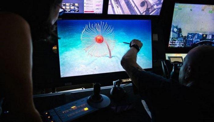 Bilim insanları 120 metrelik hayvan keşfetti