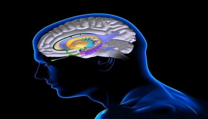 Alimlər: insan beyni xatirələr yaratmağa qadirdir