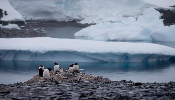 Внезапное пение антарктических льдов напугало учёных
