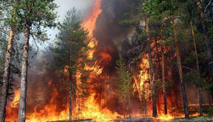 Пожар в Огузе полностью потушен - МЧС