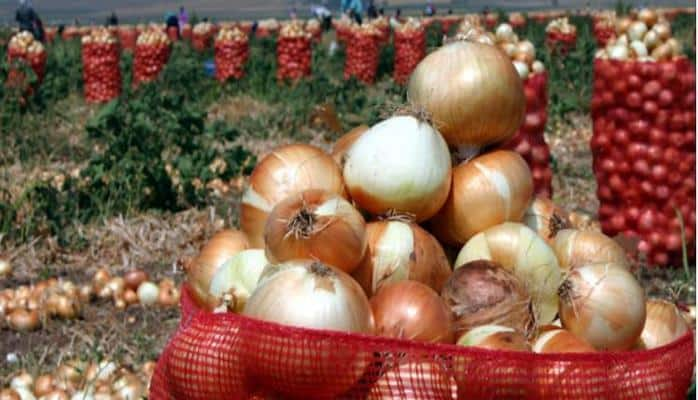 Soğan satışı 4 mln dollar pul gətirib