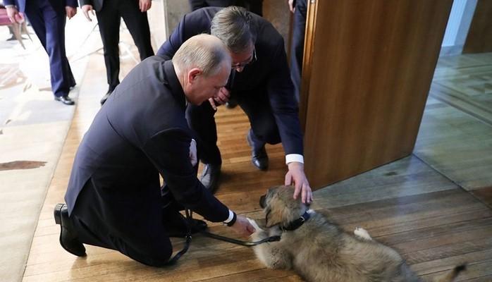 Путину подарили щенка по кличке Паша