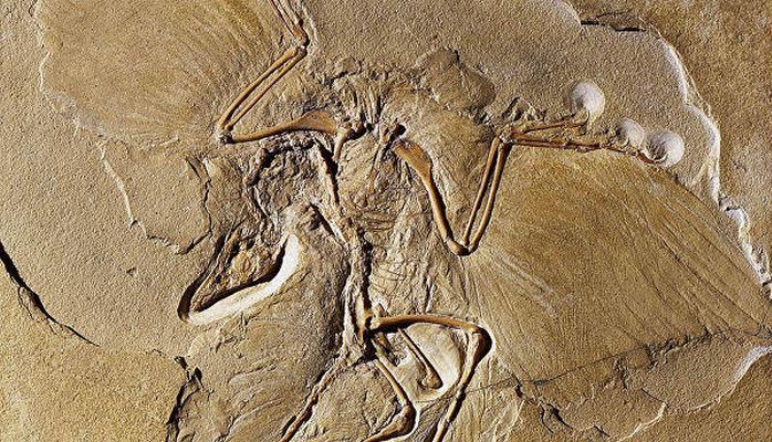 İranda 5 min illik insan skeleti tapıldı