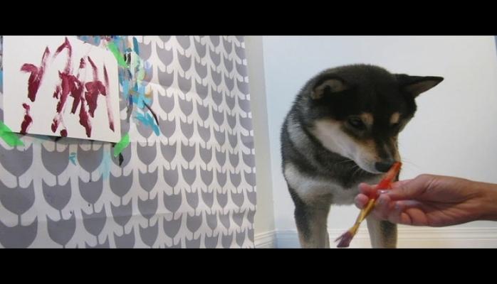 Собачье творчество: В Канаде пес рисует картины, которые имеют успех в Интернете