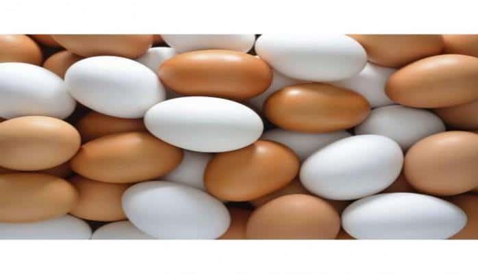 Yumurta barədə nələri yanlış bilirik?