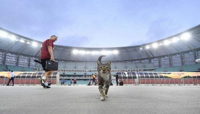 Обласканная «Арсеналом» кошка выставлена на продажу
