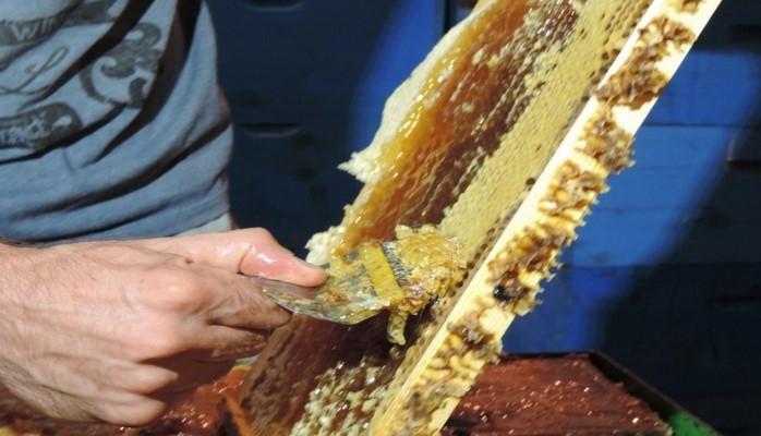 Qubalı arıçı istehsal etdiyi balı Yaponiyadan olan müştərilərə satır