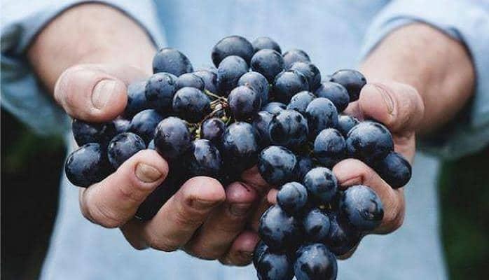 Ученые раскрыли пользу винограда в борьбе с раком