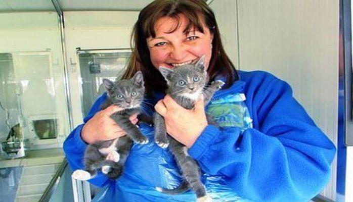 Женщина бросила высокооплачиваемую работу ради бездомных котят