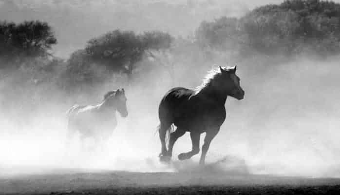 Ученые выяснили, зачем лошадям копыта