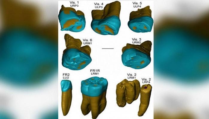 Ученые: скрещивание снеандертальцами спасло современного человека отэпидемий гриппа