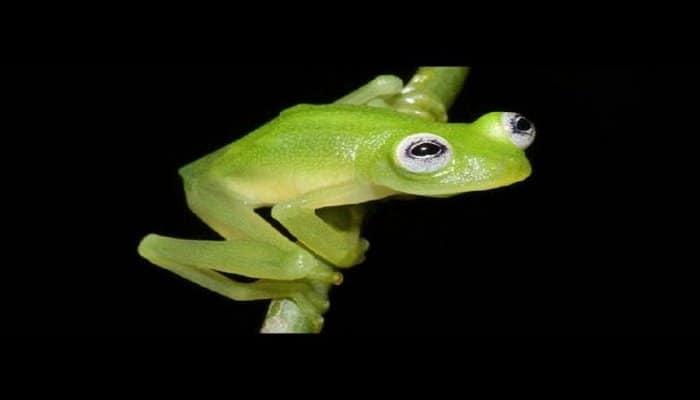 Биологи рассказали о неизвестной костариканской лягушке