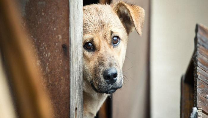 Новая теория: коронавирус перешел на людей от бродячих собак
