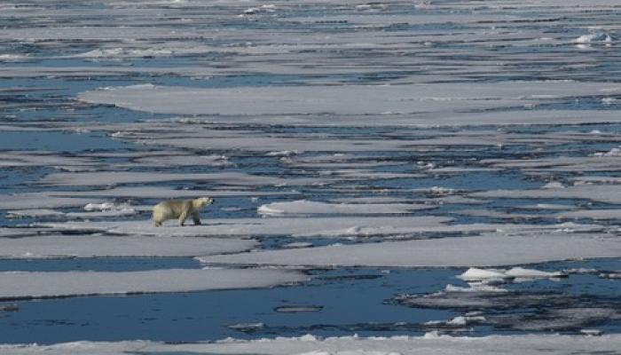Arktikada rekord temperatur qeydə alınıb