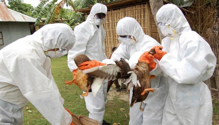 Минсельхоз Чехии подтвердил вспышку птичьего гриппа на востоке республики