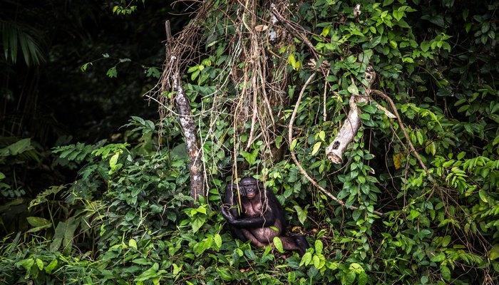 ABD'li bilim insanları: Ormanların yok edilmesi hayvanlardaki virüslerin insanlara sıçramasını kolaylaştırıyor